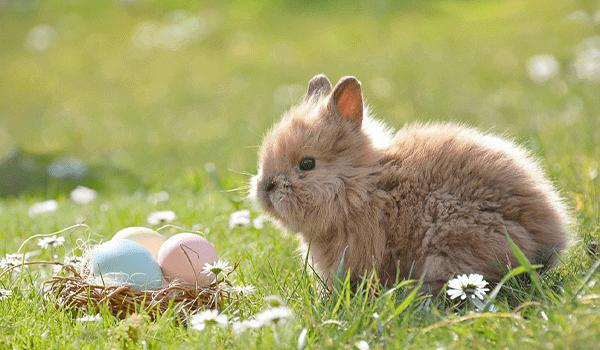 Easter Egg Hunts Toledo