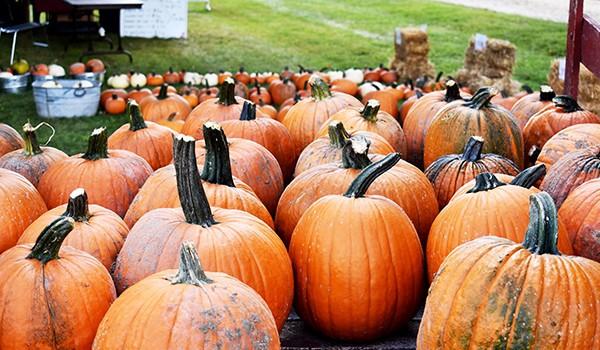 ann arbor fall festival