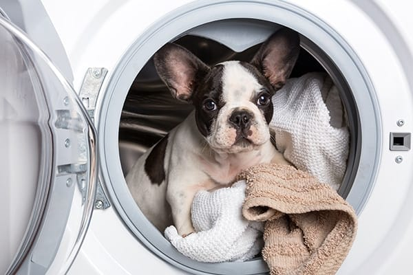 how to get pet hair off blankets in the wash
