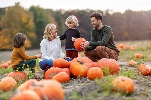 pumpkin patches in Toledo