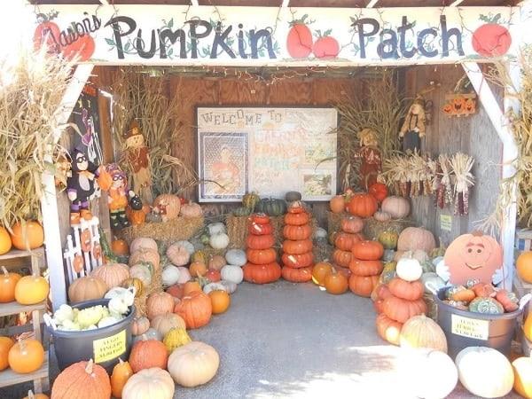 you pick pumpkin patch in Toledo